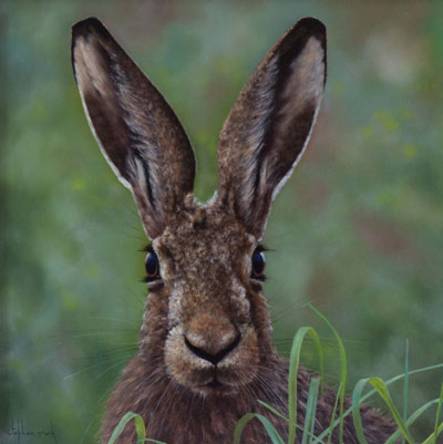 Stephen Park Countryside Hare