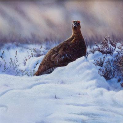 Wayne Westwood Grouse Countryside Life Paintings