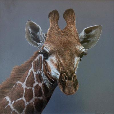 Stephen Park Wildlife Animal Giraffe