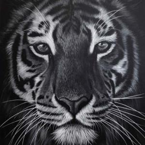 Richard Symonds Wildlife Black And White Tiger