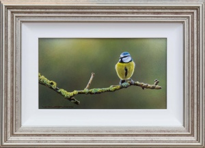 Bluetit's Rest,