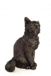 Raffy Maine Coon Kitten,