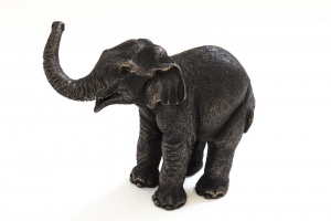 Asian Elephant Calf,