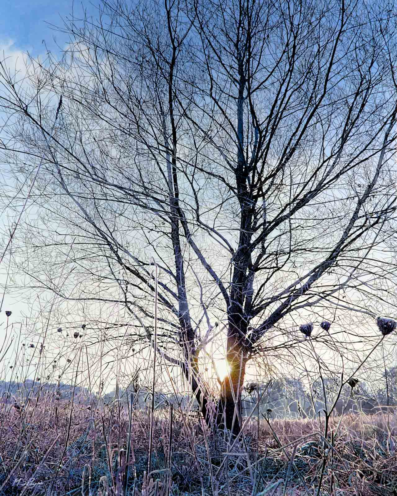 Detailed oil painting of tree against sunlight by artist Mark Payne