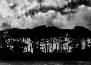 Tree Line, Warkworth,
