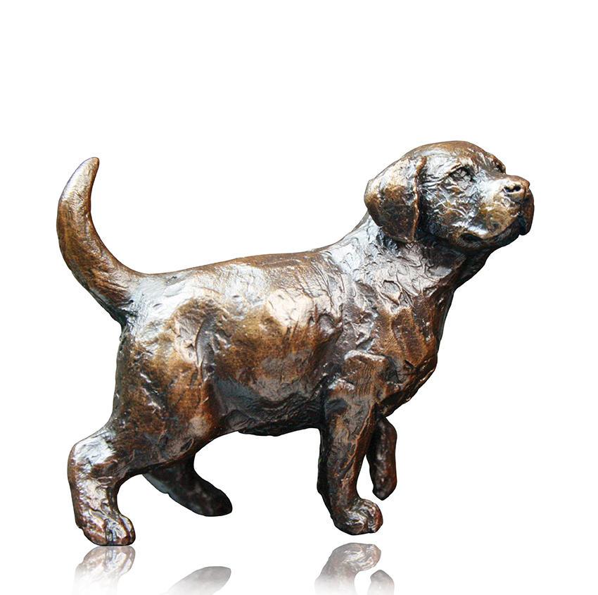 Labrador Puppy Standing