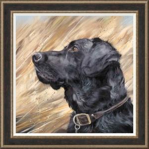 Black Labrador in Reeds,