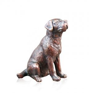Small Labrador Sitting,