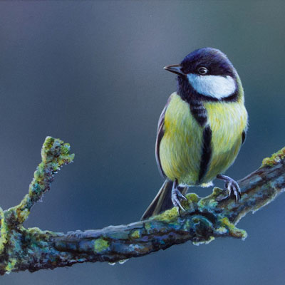 Painting of a Great Tit Perched on a branch by Wayne Westwood