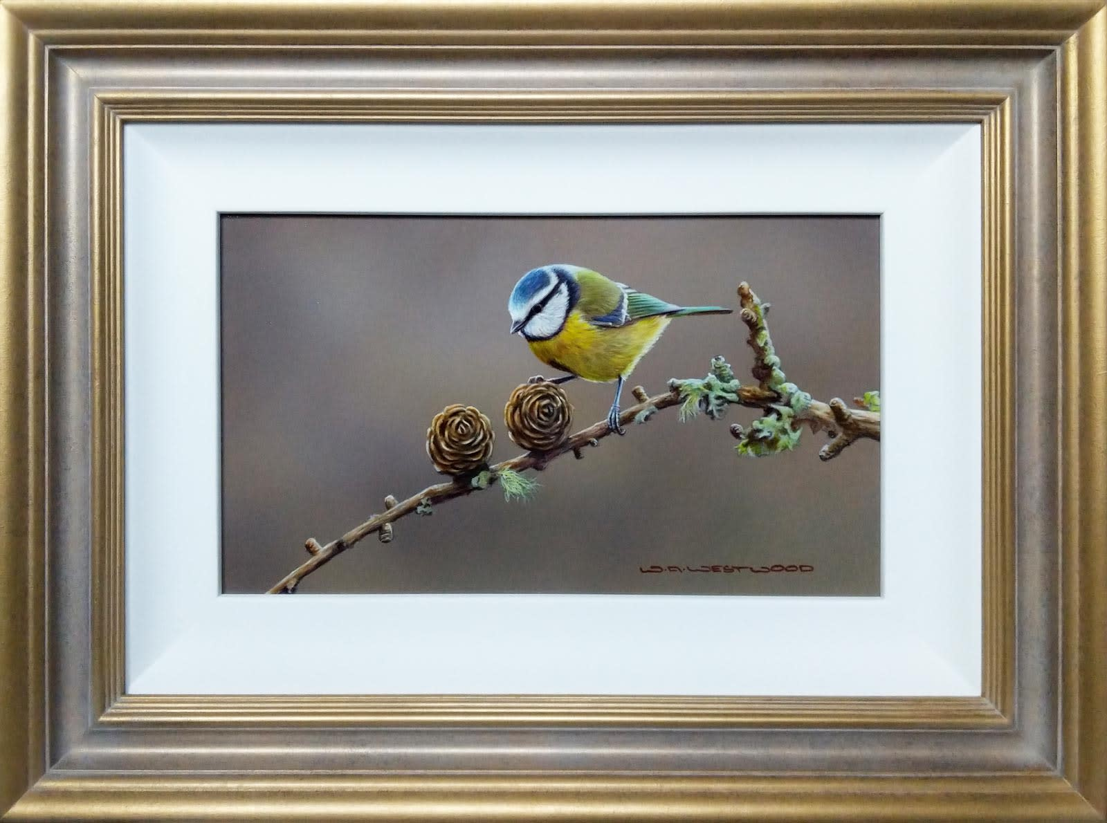 Blue Tit Commission, Wayne Westwood