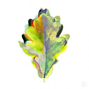 Oak Leaf,
