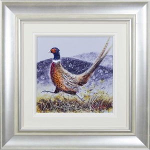 Pheasant,
