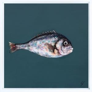 One Grey Sea Bream,