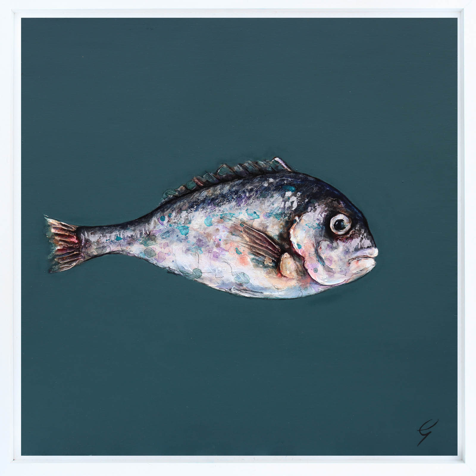 One Grey Sea Bream