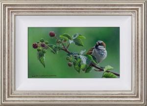 Sparrow's Perch,
