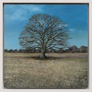Ancient Oak Winter Study,