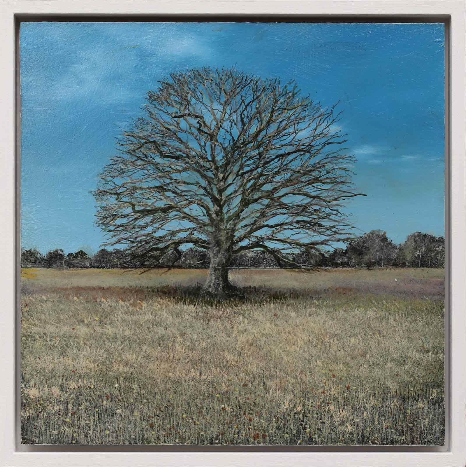 Ancient Oak Winter Study