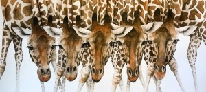 Drinking Problem, Giraffes,