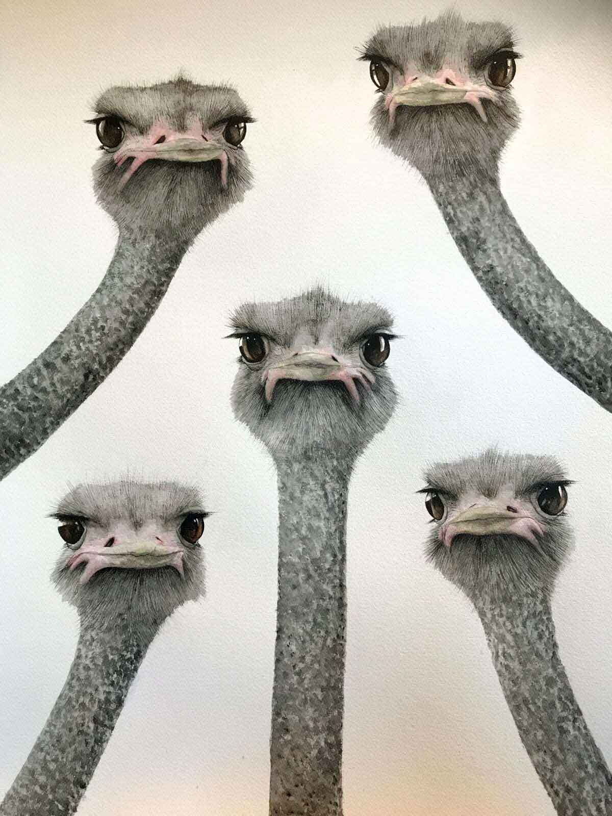 Nosy Neighbours, Ostriches