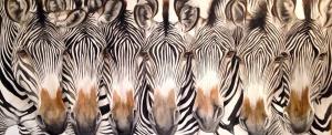 Family Resemblance, Zebras,