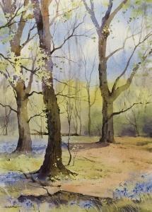 Bluebell Season, Sussex,