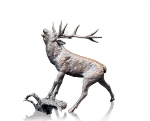 Stag Roaring,