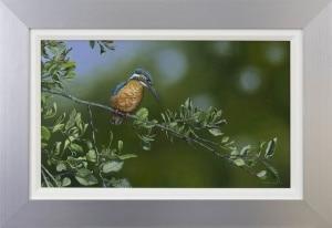Kingfisher,